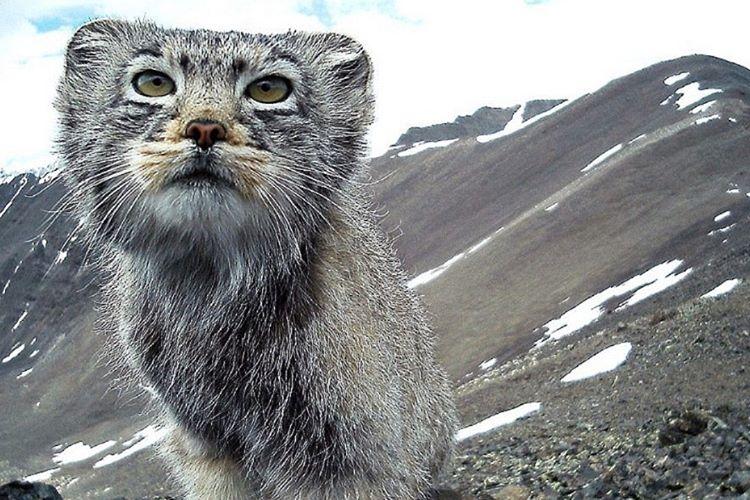 İlk kedilerin yaklaşık 30 milyon yıl önce yaşadığına inanılmaktadır.