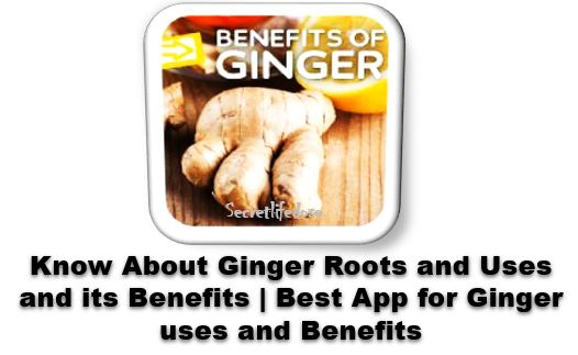 Know About Ginger Roots and Uses and its Benefits | Best App for GInger uses and BenefitsGinger roots and uses and its Benefits Know everything with the help of this app,secretlifedose