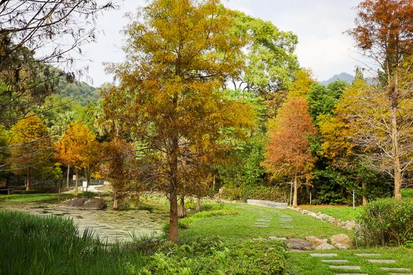 太平落羽松|太平苗圃裡面隱藏著湖光山色美麗倒影,近東汴國小
