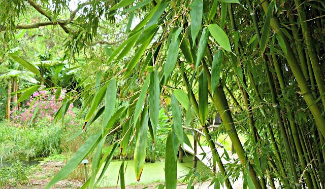 Bambous pour un Haïjin