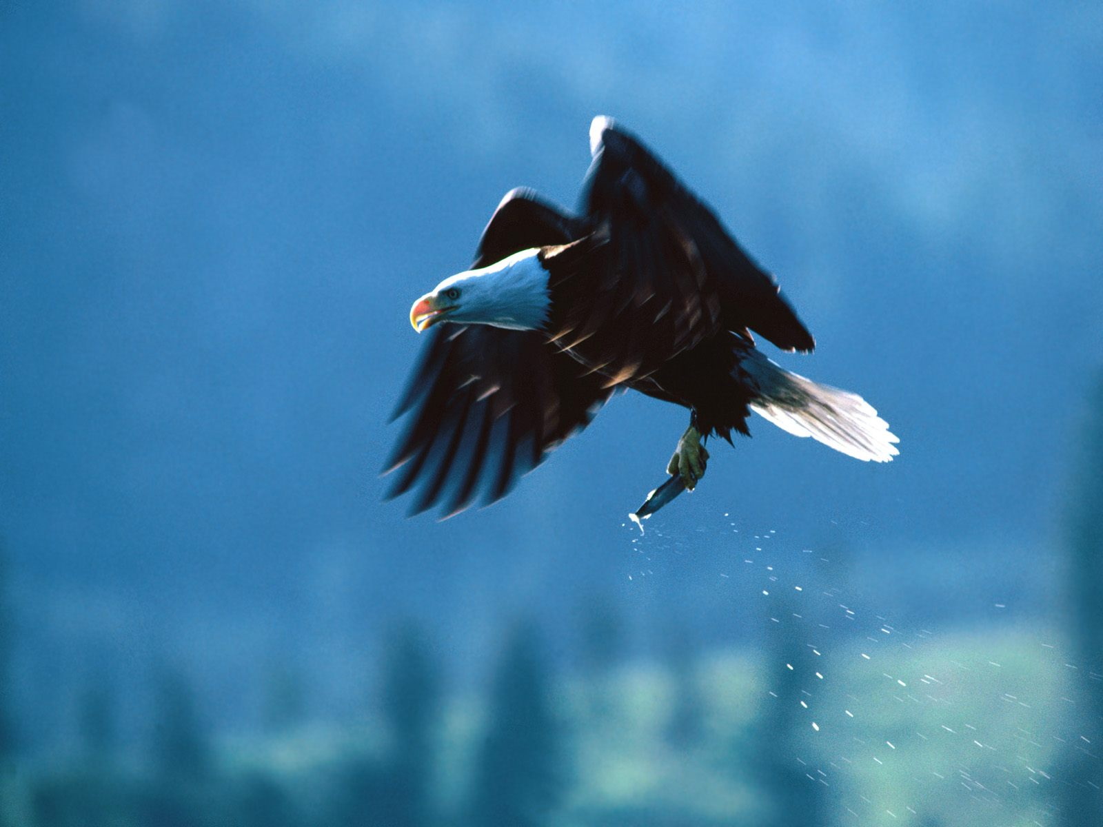 Download Free Falcons Wallpapers 3 Beautiful Collection: Beautiful Birds Of The World Wallpapers
