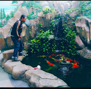 pembuatan kolam ikan koi