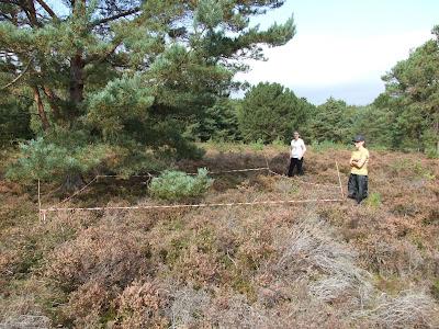 A quadrat at Thurstaston Common, one of the sites we survey