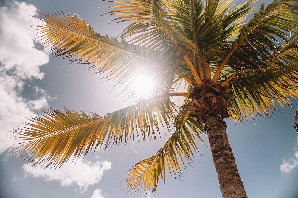 Palm tree Bahamas