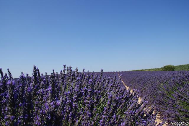 Plateau de Valensole e campi di lavanda