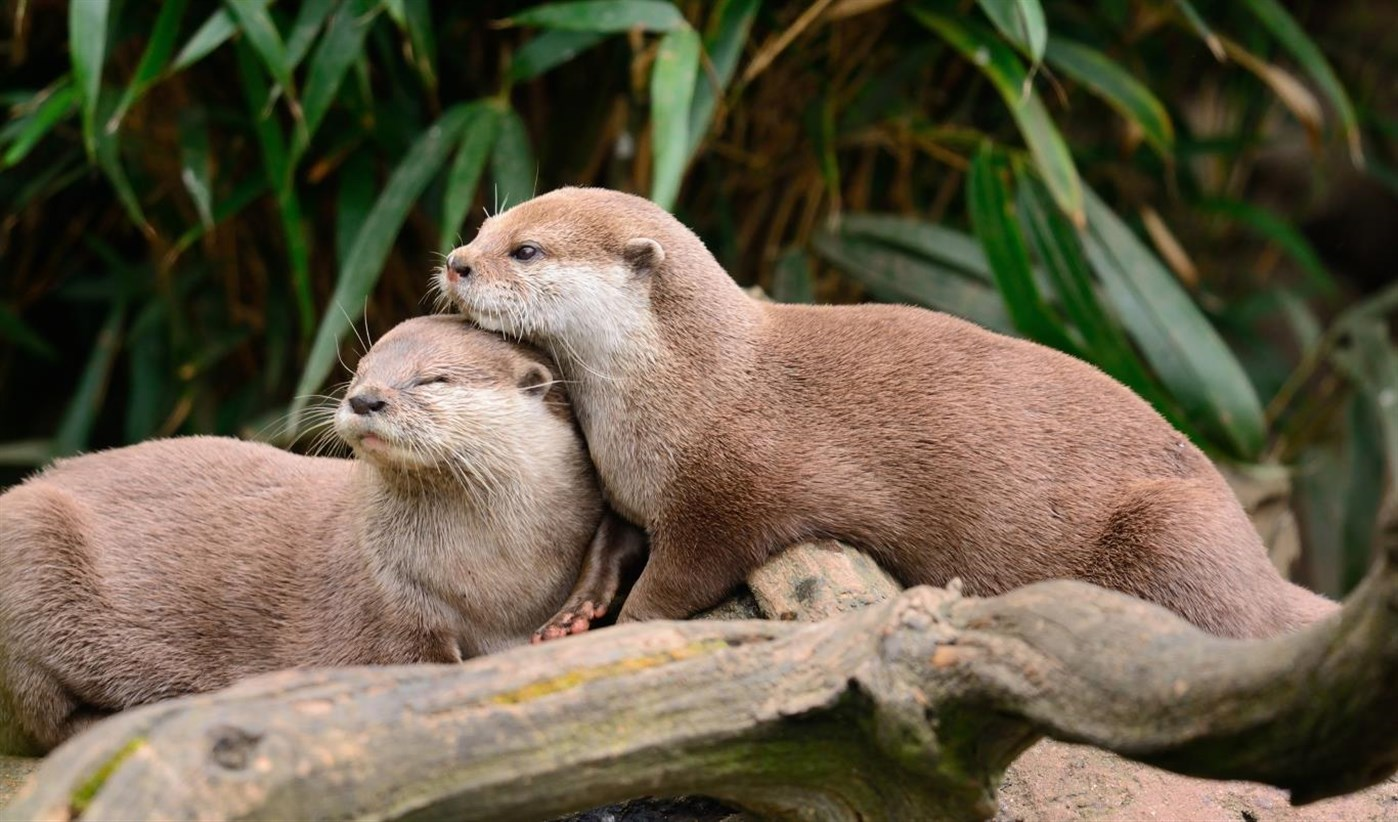 Download Otters,Tema per Windows 10