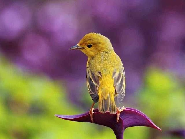 اجمل صور طيور جميلة في العالم 2020