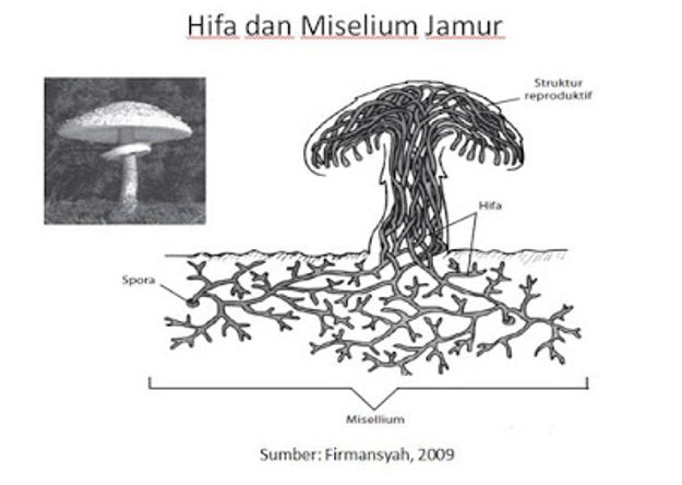 Berikut ini adalah contoh soal Biologi tentang Ciri Khas Kelompok Jamur Yang Membedakan Antara Tumbuhan Dengan Hewan