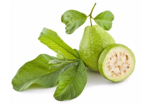 لورق الجوافة فوائد تعرف عليها Benefits-of-guava-leaves