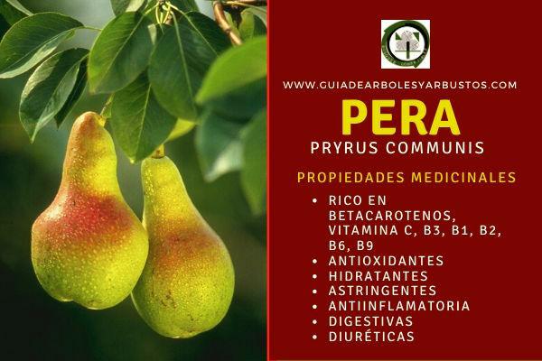 La pera, la fruta del peral tiene propiedades antioxidantes, antiinflamatorias, digestivas
