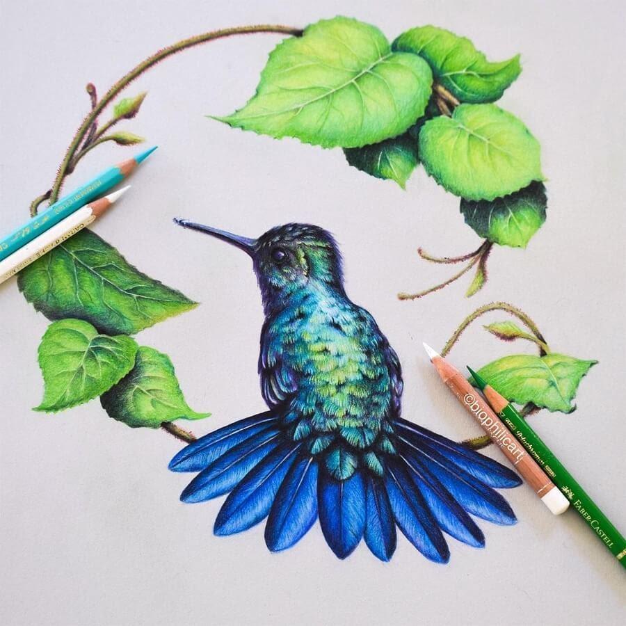 12-Hummingbird-Sallyann-www-designstack-co