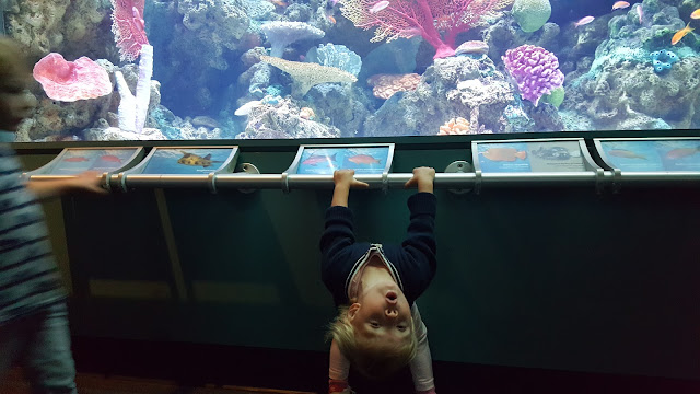 long-beach-aquarium