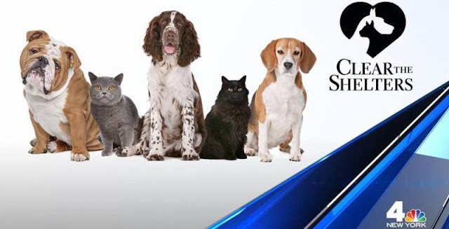 #cleartheshelters|nbc new york