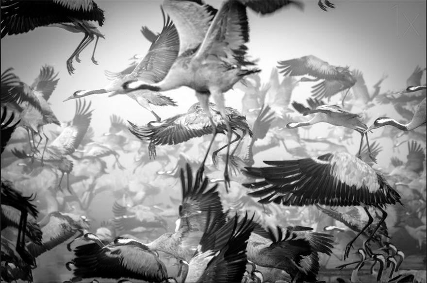 omorfos-kosmos.gr - Υπέροχες φωτογραφίες από μεταναστεύσεις ζώων (Εικόνες)