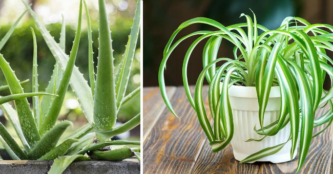 The Best Plants To Purify And Decorate Your Home