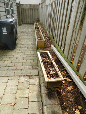 Bedford Park Toronto Fall Back Yard Cleanup After by Paul Jung Gardening Services--a Toronto Gardening Company