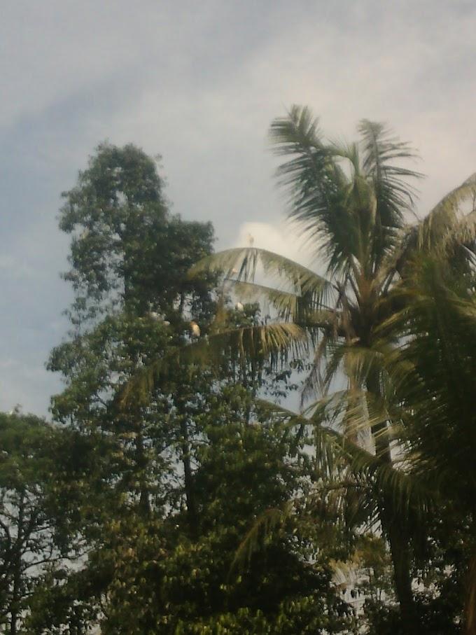 Wisata Fauna Desa Ketingan