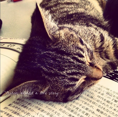 Cat and kanji