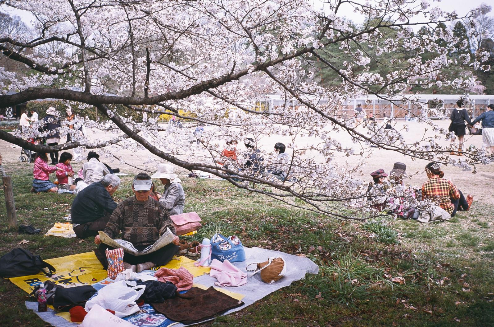 府立 植物園 京都