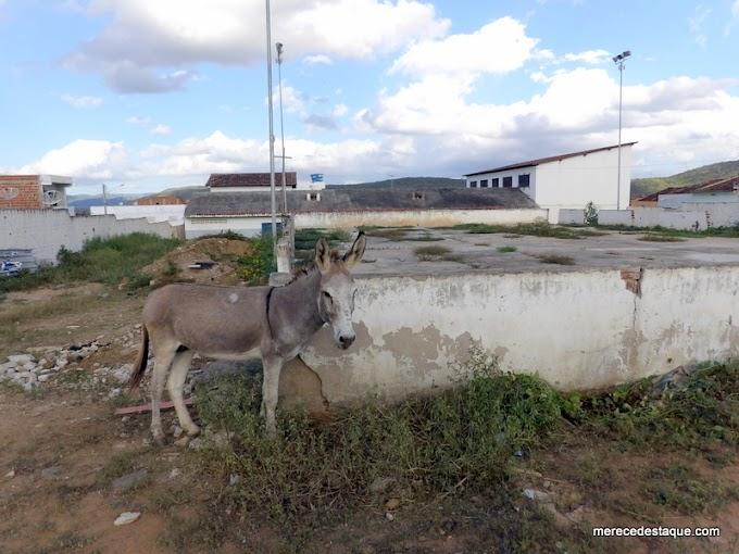 Quadras esportivas de escolas municipais em Santa Cruz estão abandonadas há mais de dois anos