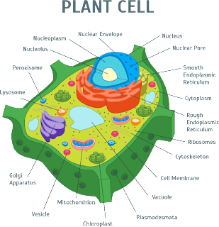 What is a cell? Definition, Functions & types | FAQ