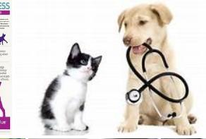 Ви вкритий-Pet медичне страхування, що потрібно знати