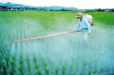 Insecticidas y Herbicidas