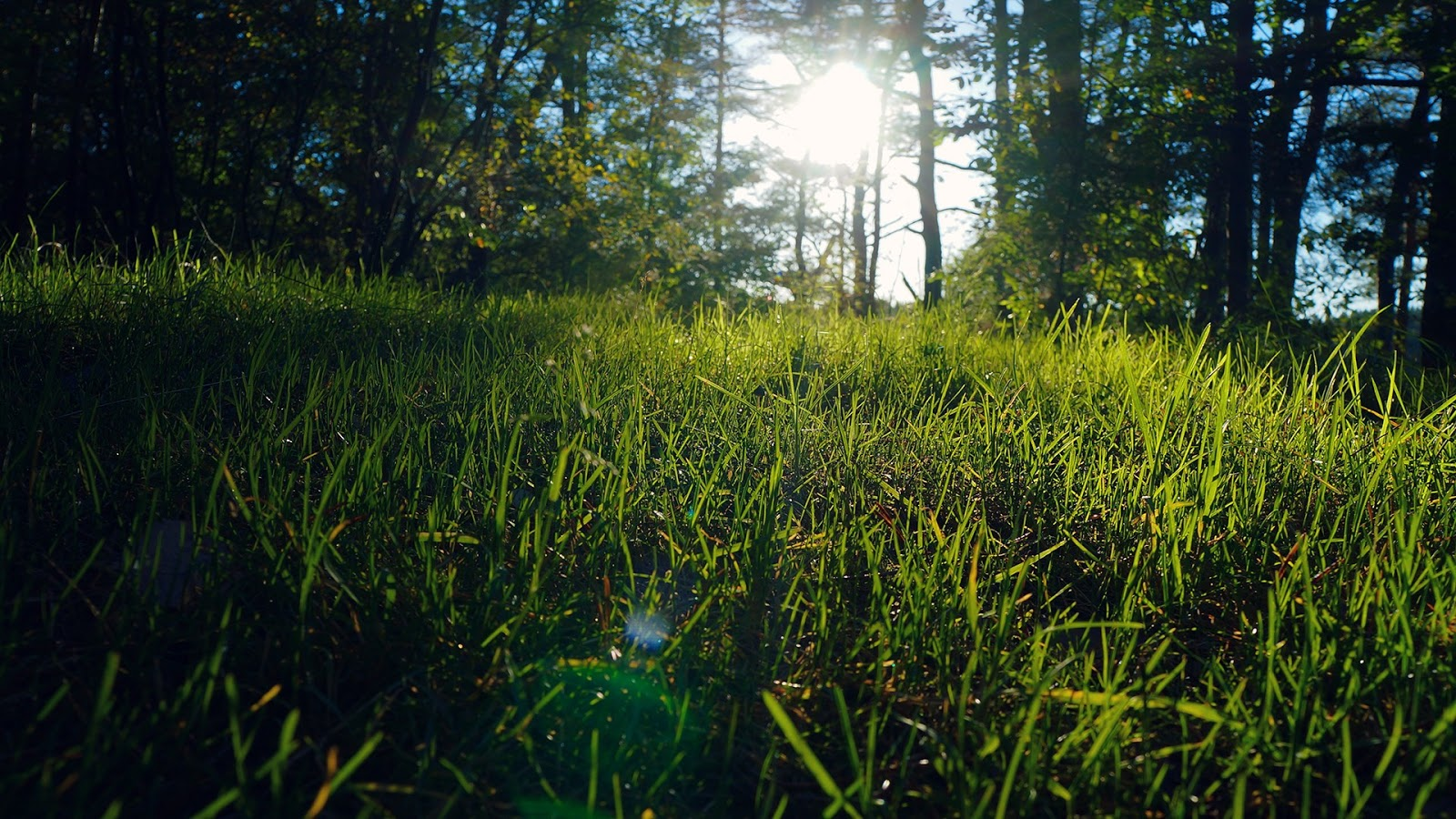 Sunlight in the grassland