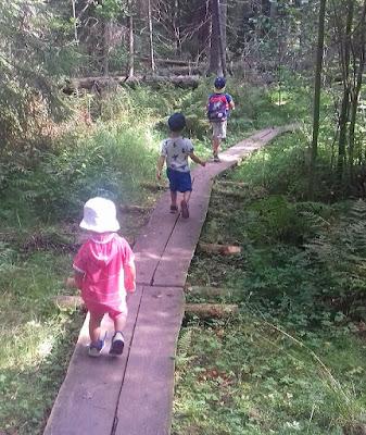 metsäretki, pitkospuut, metsä