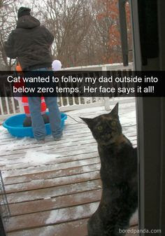 Cat wanted to go outside in freezing temperatures. Quickly regretted it.