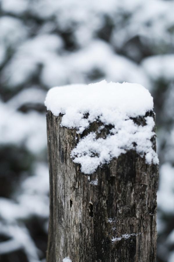 Blog + Fotografie by it's me! - Draussen - Frau Frieda sucht Schnee, Schnee auf einem Holzpflock