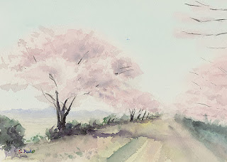 桜、開花予想図 水彩