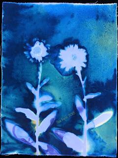 Wet cyanotype_Sue Reno_Image 441