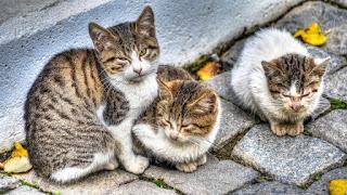 Precauciones y consejos para antes de coger a los gatitos de la calle