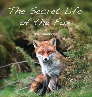 The Secret Life of The Fox