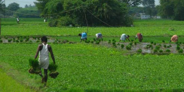 Kharif season sowing updates