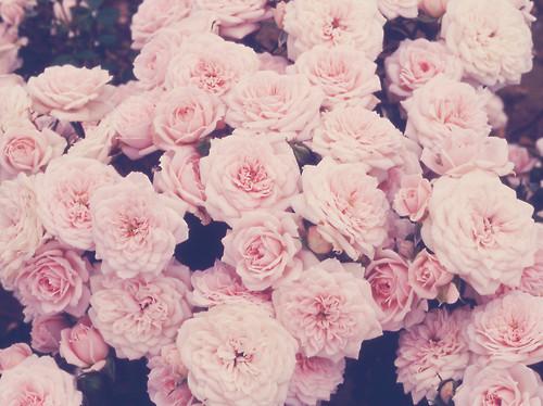 Fleur Rose Swag Idee D Image De Fleur