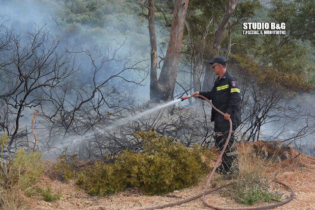 Πυρκαγιά σε ελαιώνα στη Δήμαινα Αργολίδας