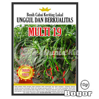 Benih Cabe Merah Keriting Tahan Virus dan Jamur  (MULTI-19)