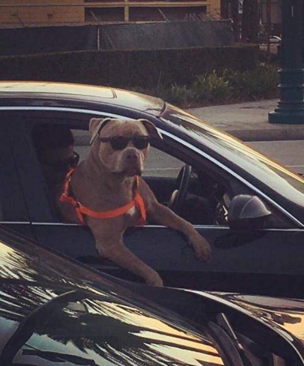 cachorro camarada