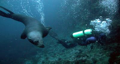 Diving, Robinson Crusoe Island, Chile.