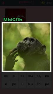 обезьяна чешет подбородок и ищет мысли в своей голове