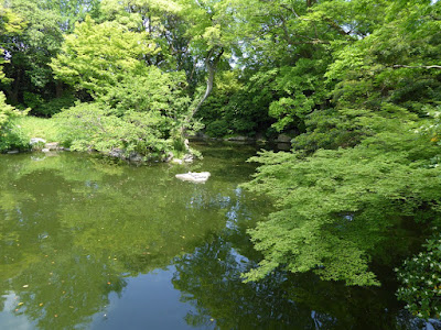 京都御苑 九條池 モミジ(新緑)