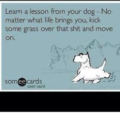 leam a lesson from your dog, no matter what life brings you, kick some grass over that shirt,