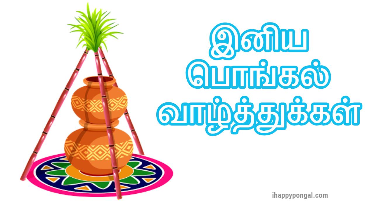 pongal thai pongal pongal festival thamizhar thirunaal  pongal