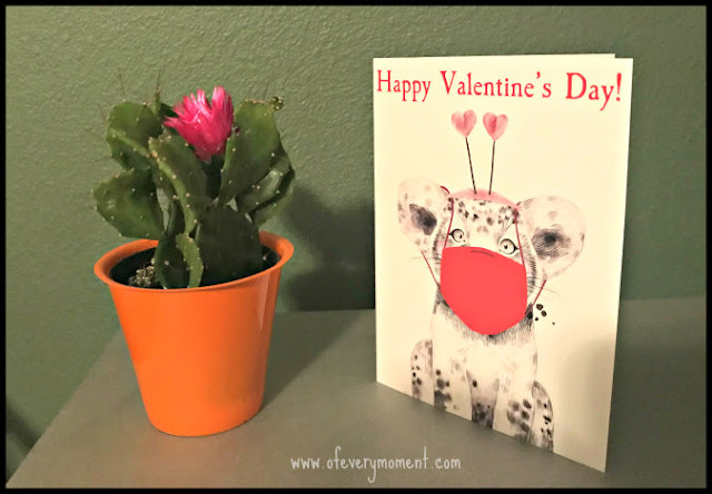 small flowering cactus and valentine's day card