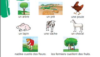 كتاب تعلم اللغة الفرنسية بالصور للمبتدئين
