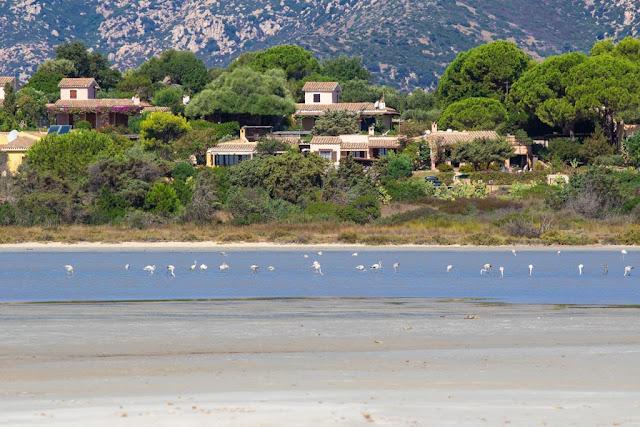 Stagno di Notteri-Spiaggia di Porto Giunco-Fenicotteri