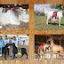 Pecuaristas inscrevem animais para a 76ª Exposição Nordestina