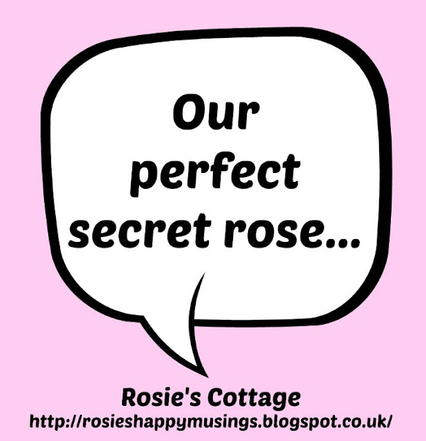 Our perfect secret rose